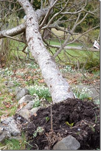 tree on ground