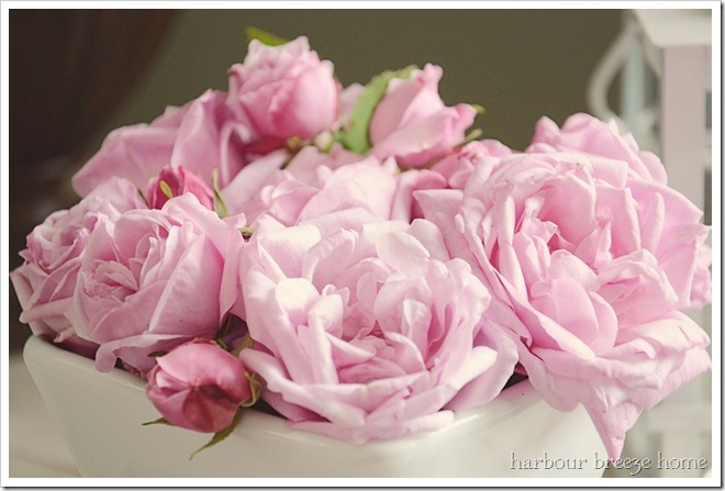 pink roses ps