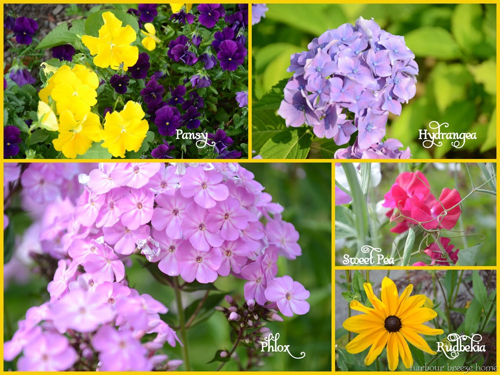 plants and flowers names, Beautiful flower