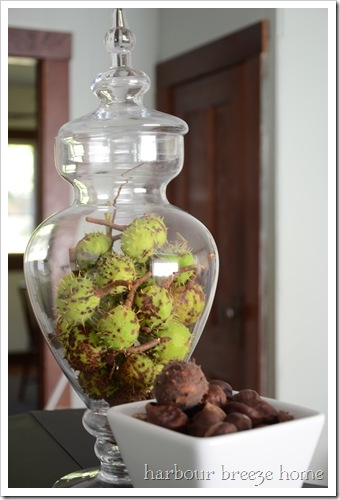 jarful of horse chestnuts