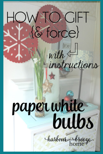 How to gift and grow paper white bulbs on harbourbreezehome.com