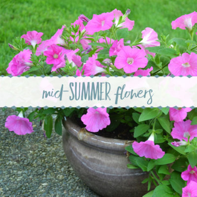 Mid-Summer Flowers