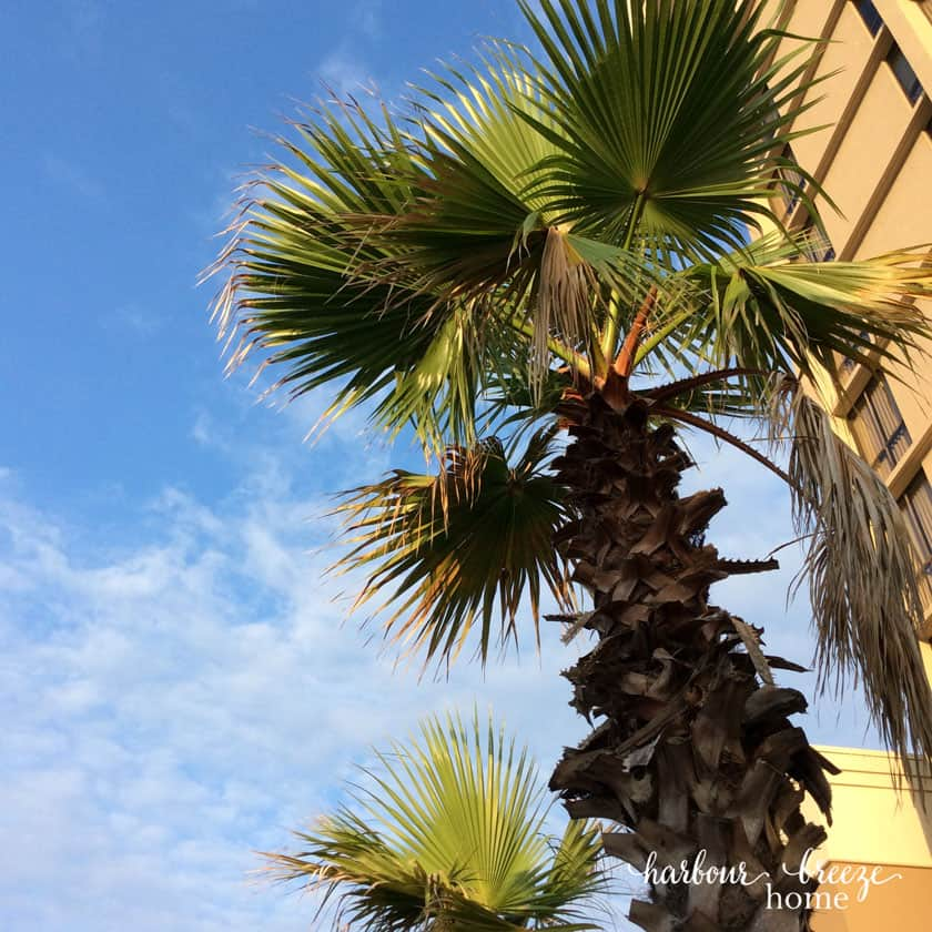 palm tree leaves against a blue sky