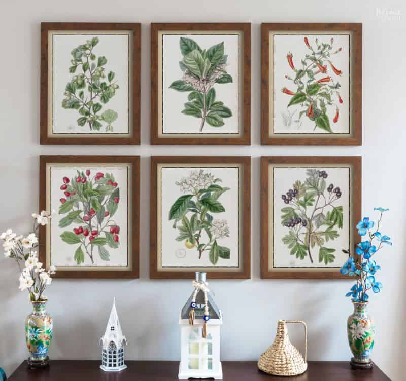 Set of 6 colored paintings of plants