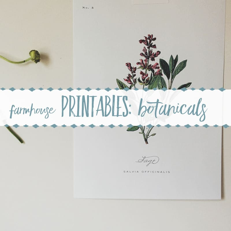 100+ Free Farmhouse Printables- Botanical Sets