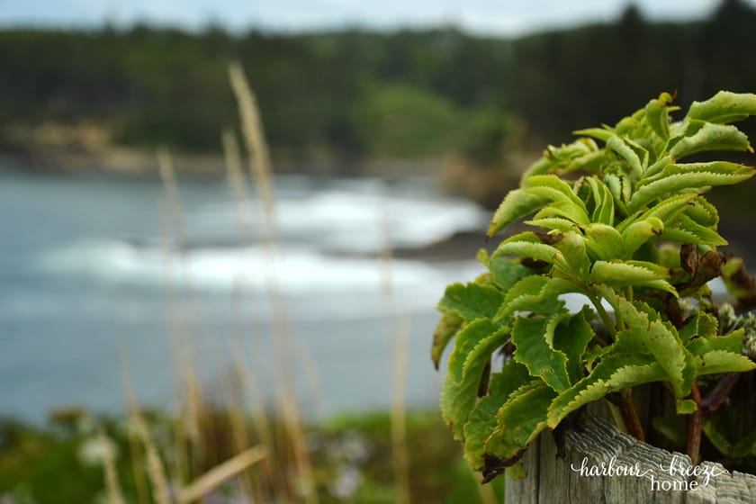 greenery with the ocean behind
