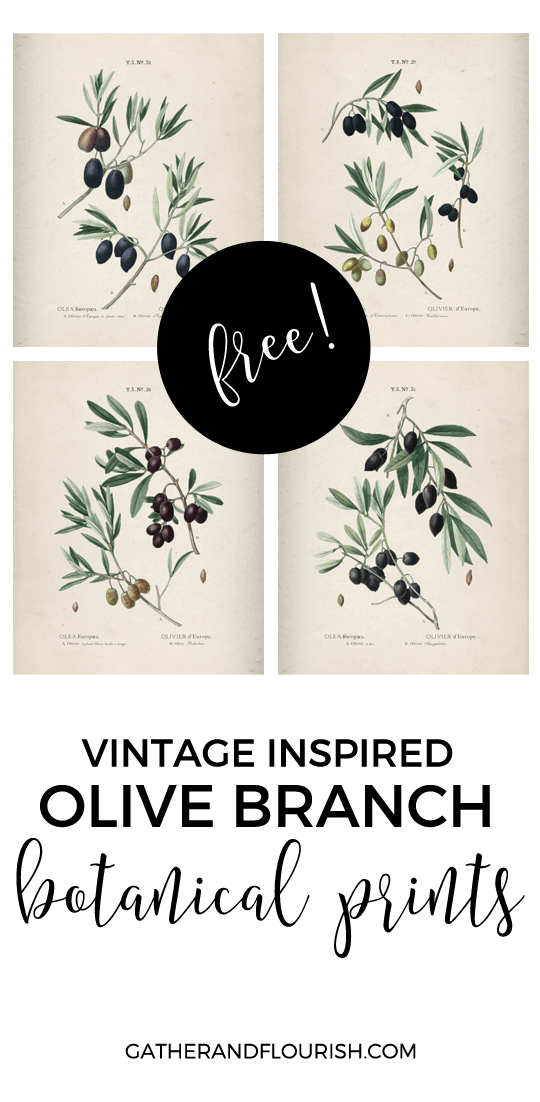 Set of 4 botanical prints of olive branches