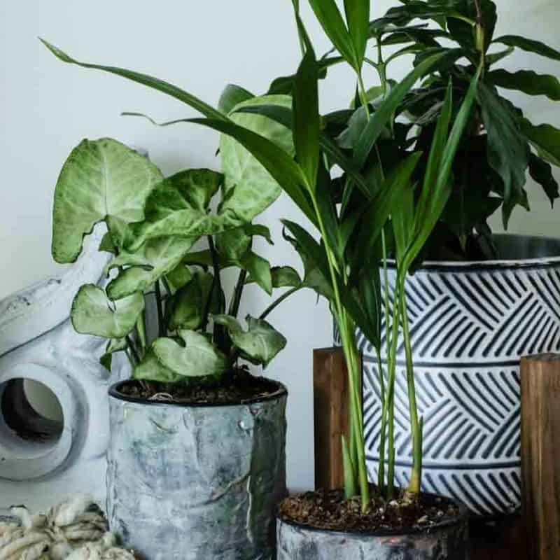How to Turn Tin Cans into DIY Flower Pots