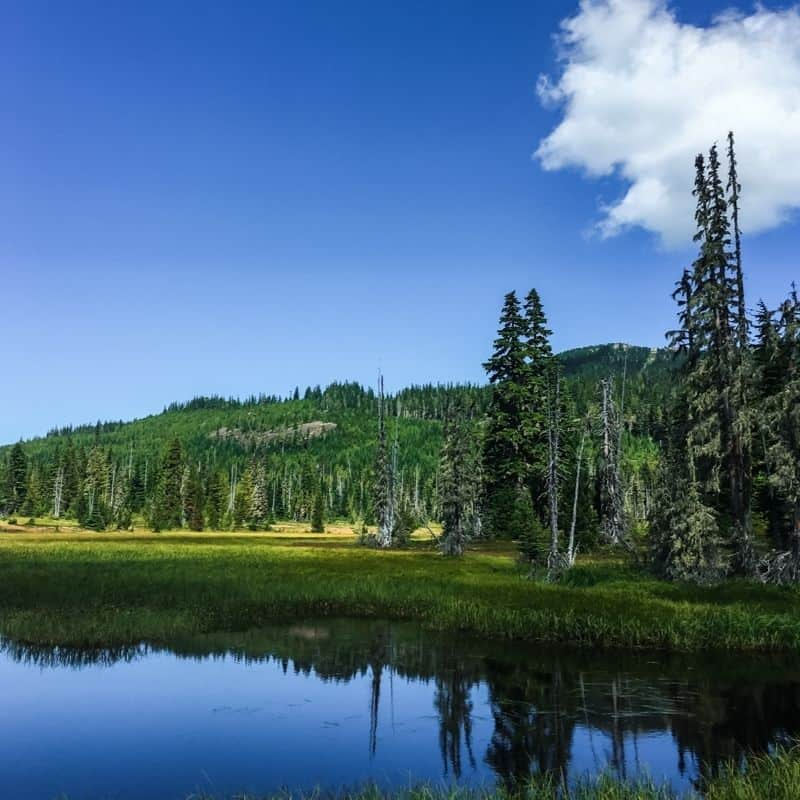 Travel to Mount Washington on Vancouver Island in Summer