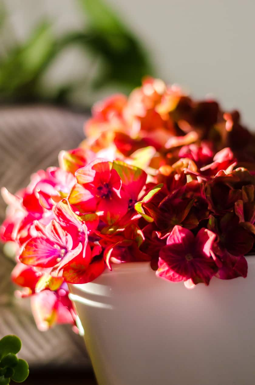 Flowers picked from your backyard garden and placed in a vase is a budget friendly room decor idea for Fall.