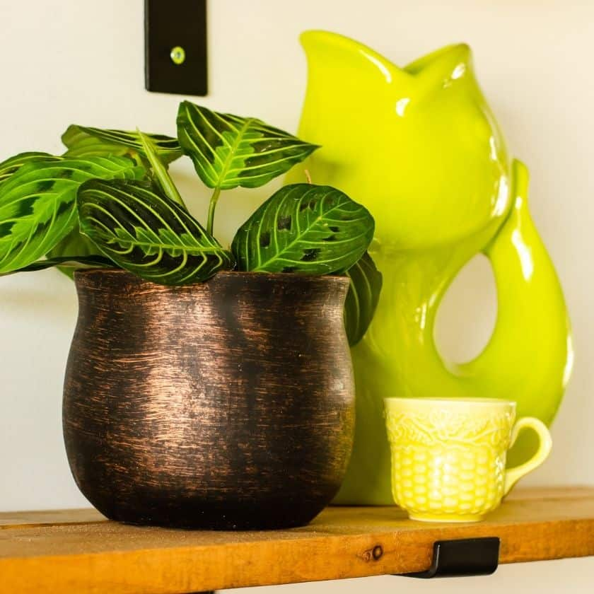 How to Decorate Farmhouse Shelves with Houseplants