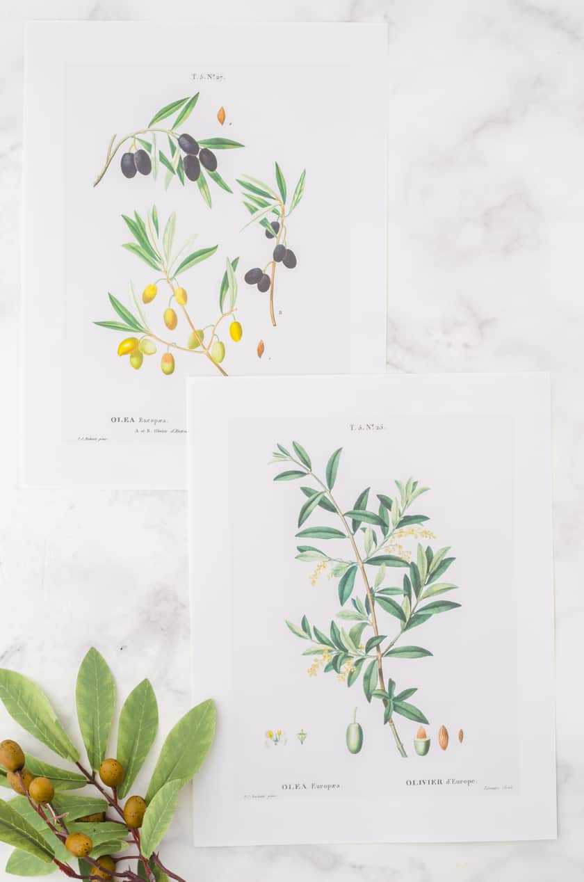 2 botanical wall art prints of olive branches